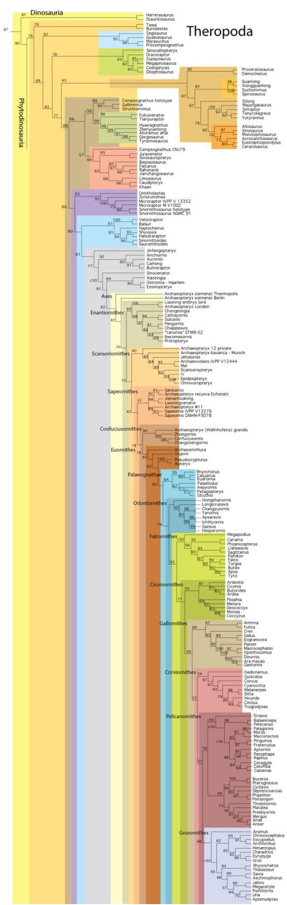 Figure 1. More taxa, updated tree, new clade names.