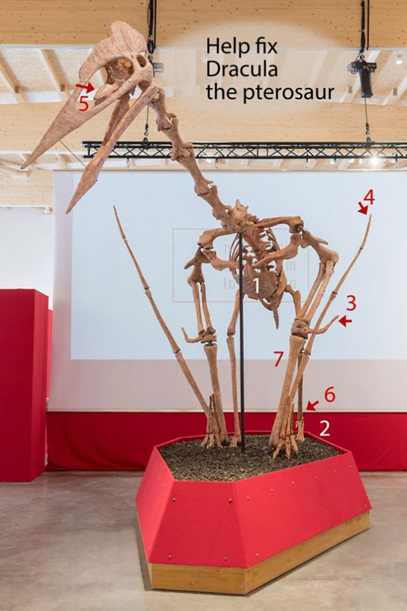 Figure 1. Dracula the giant azhdarchid pterosaur museum mount. Hopefully it's not too late to fix the problems here.