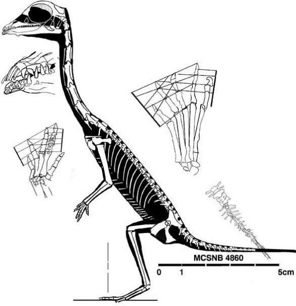 Figure 4. Langobardisaurus bipedal.