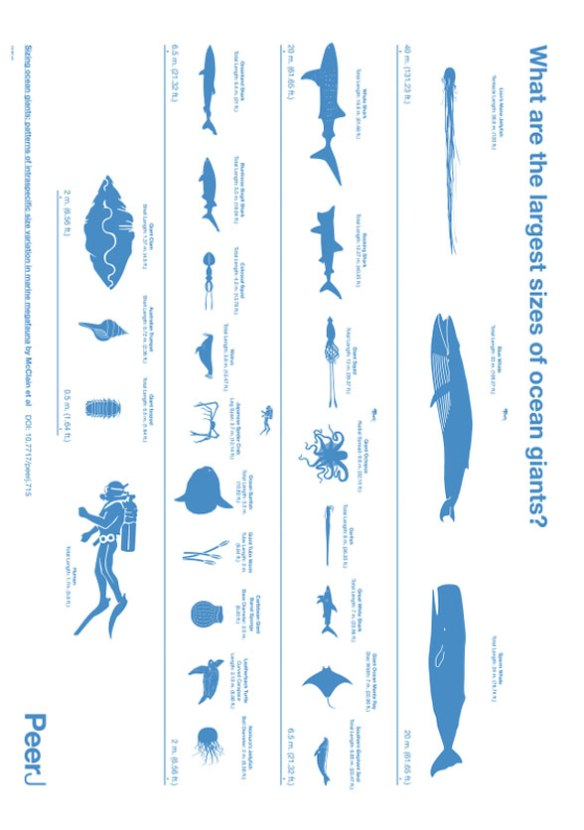 Figure 2. Poster turned on end illustrating the largest creatures in the sea to scale from McClain et al. 2015,