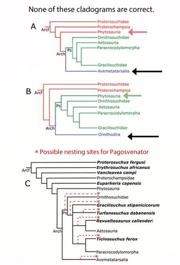 Figure 3. Cladograms produced by Lacerda et al. 2018.