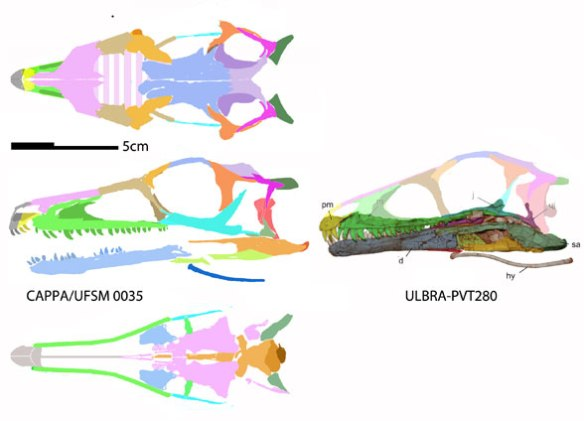 Figure 2. The two skulls attributed to Buriolestes (holotype on the right). The one on the left nests as the basalmost dinosaur, basal to theropods and phytodinosaurs.