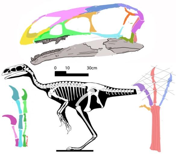 Figure 1. Jianchangosaurus nests at the base of the Maniraptora in Cau 2018, but with therizinosaurs in the LRT.