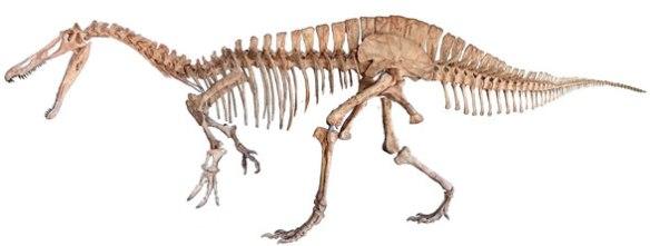 Figure x. Suchomimus restoration.