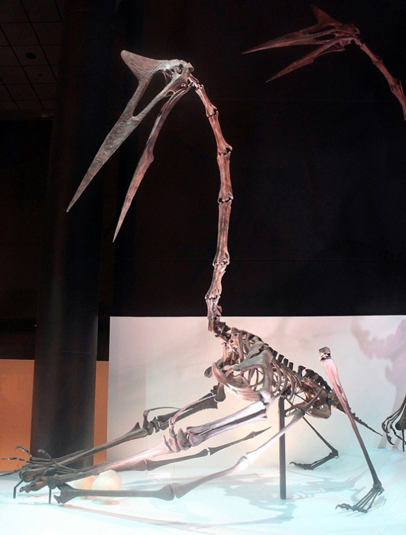 Why is this Houston Museum Quetzalcoatlus posed like this? Very strange.