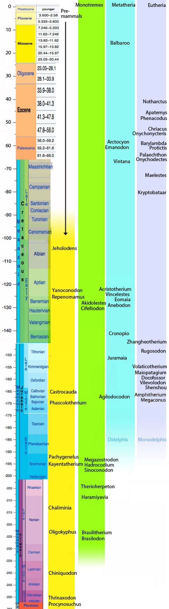 Figure 2. Mesozoic time line showing the first appearances of several fossil mammals and the clades they belong to.