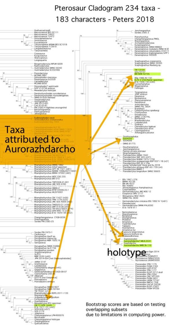 Figure 1. Aurorazhdarcho specimens in the LRT according to Wikipedia.