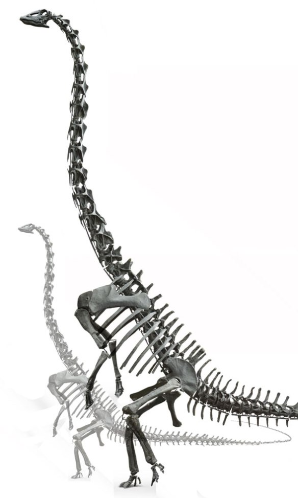 Figure 1. Diplodocus standing in a typical feeding posture, as in its prosauropod ancestors.
