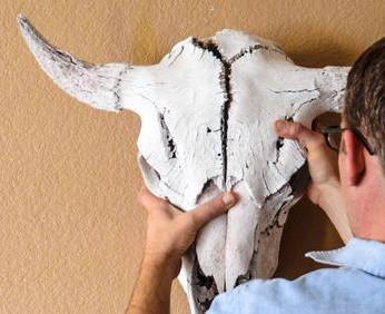 Figure 4. A modern cow skull horn most closely resembles the Permian pareiasaur horn, by convergence, of course.