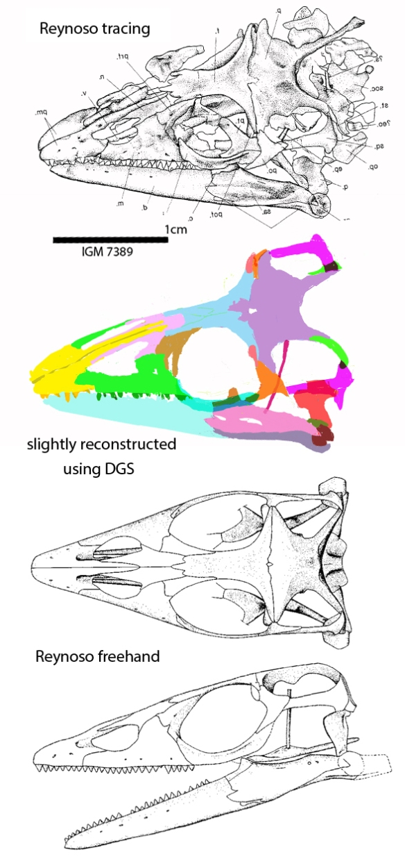 Figure 2. Huehuecuetzpalli has a tall, narrow epipterygoid, as in other lepidosaurs, and just a pore of an antorbital fenestra in the maxilla.