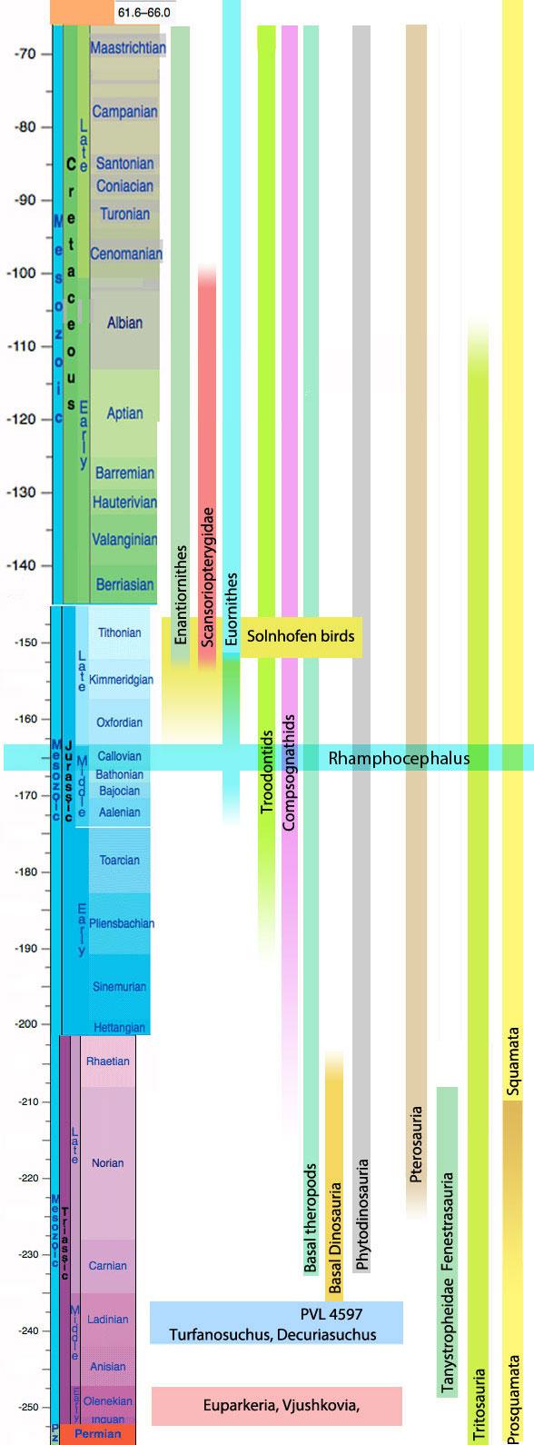 Figure 6. Rhamphocephalus chronologically precedes the Solnhofenbirds by several million years making it the oldest known bird.