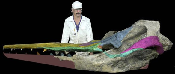 Figure 1. Llanocetus, hailed as a baleen whale with teeth and gums, is just a large archaeocete.