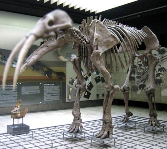 Figure 1. Long-legged Gomphotherium.
