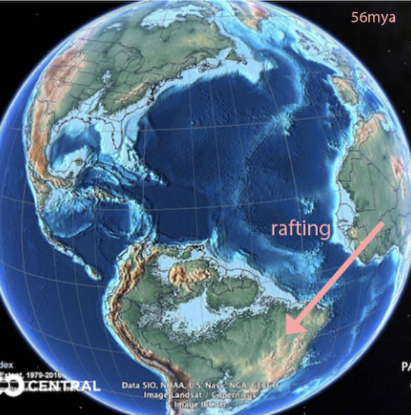 Figure 1. At the start of the Eocene this is the distance monkeys would have to raft to get to South America. This hypothesis is invalidated by today's blogpost.