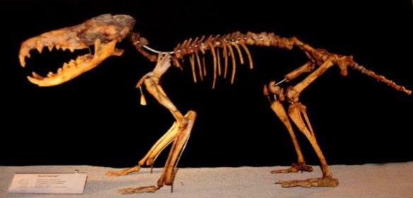 Figure 2. Deinogalerix skeleton.