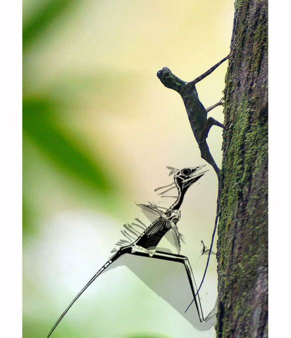 Figure 2. Draco and Sharovipteryx bipedally on tree trunk, flapping its tiny arms. Hatchling Sharovipteryx between them.