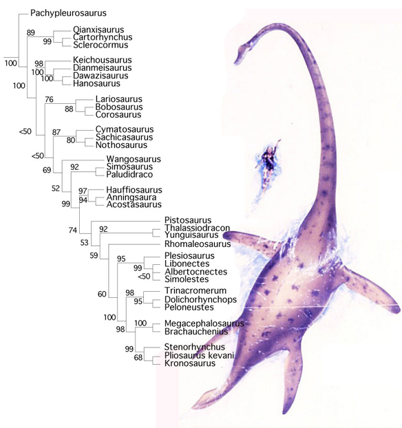 Figure 4. Subset of the LRT focusing on Eusauropterygians (pachypleurosaurs, nothosaurs, plesiosaurs and kin).