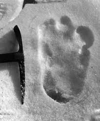 Figure 1. 2019 yeti tracks found in Nepal and posted online.