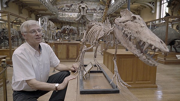 At the Museum of Natural History in Paris, Dr. Christian De Muizon shows off the complete reconstruction of the Pakicetus skeleton, surprisingly an ancient relative of modern day whales.