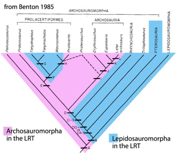 Figure 2. Cladogram from Benton 1985 in which he nests pterosaurs closer to lepidosaurs than to dinosaurs and other archosaurs.