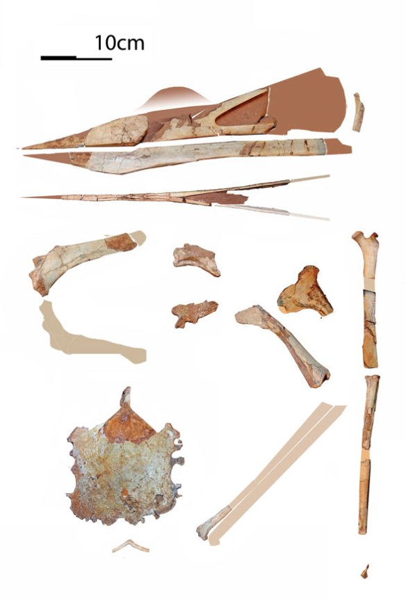 Figure 1. The larger bits and pieces of Keresdrakon. The bone is like bone, clearly distinct from the matrix.