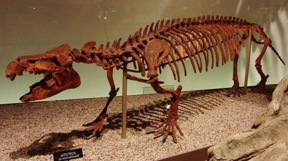 Figure 1. Moeritherium skeleton. Note the tiny, slender tail.