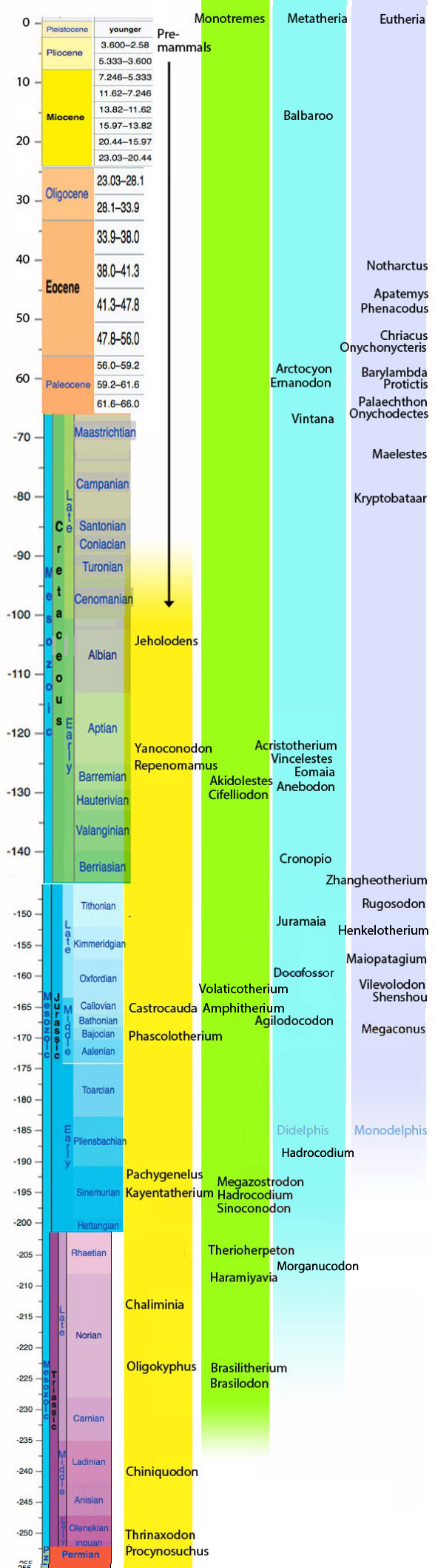 Figure 1. Select basal cynodonts and mammals set chronologically. The divergence times for placentals (Eutheria), marsupials (Metatheria) and monotremes (Mammalia) are estimated here.