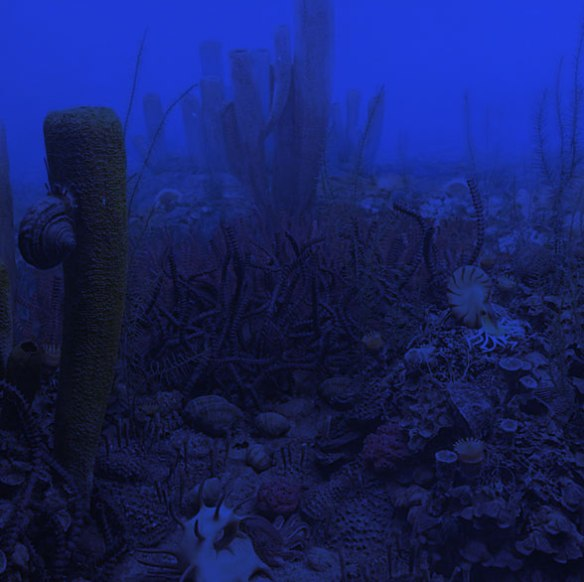 Figure 5. Permian sea floor at night. The largest prey items here are also the softest and most plentiful and easiest to graze on at night for a growing Helicoprion: the tall sponges. Just guessing giving the present data.