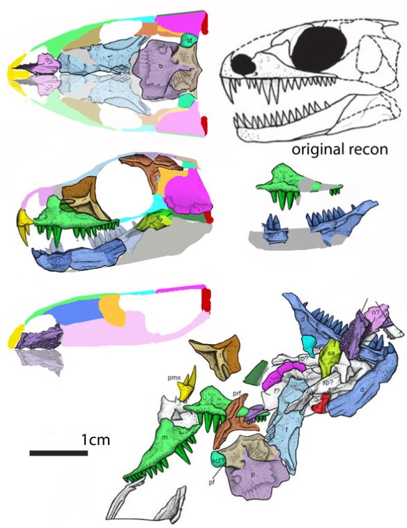 Figure 1. Carbonodraco in situ (lower right), as originally reconstructed freehand (upper right) and using DGS methods to reconstruct the skull by coloring the bone drawing.