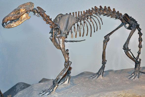 FIgure 1. Skeleton of Daphoneus.