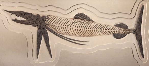 Figure 1. Protosphyraena museum mount. Length about 3m. Note the advanced placement of the pelvic fins.