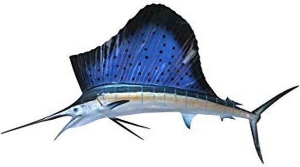 Figure 1. Istiophorus, the sailfish, nests with the cobria (Fig. 2) in the LRT, not with the swordfish.