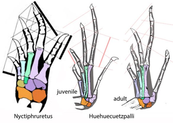 Figure 1. Lepidosauriform tarsals. The centrale is larger than the distal tarsal 2 in Late Permian Nyctphuretus. Huehuecuetzpalli is Early Cretaceous, so like fenestrasaurs, its ankle also evolved since the Early Triassic split to lose smaller tarsals.