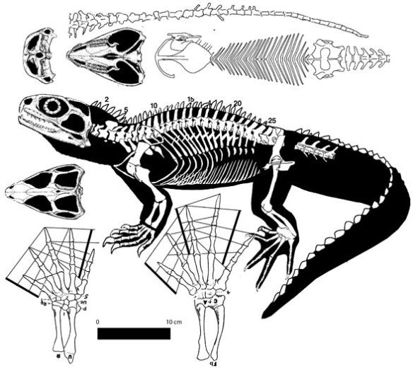 Figure 1. Sphenodon, the extant tuatara, is close to Colobops, but Marmoretta is closer.