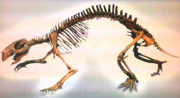 Figure 1. Adalatherium mount.
