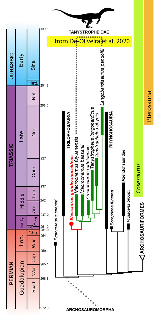 Figure 3. Published cladogram by De-Oliveira et al. 2020. Note difference with their SuppData cladogram.