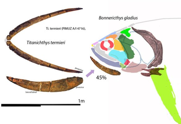 Figure 1. Mandible of Titanichthys compared to scale with reconstruction of Bonnerichthys.