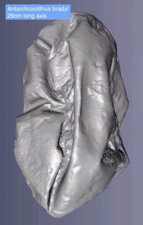 Figure 2. Antarcticoolithus bradyi from Legendre et al 2020.