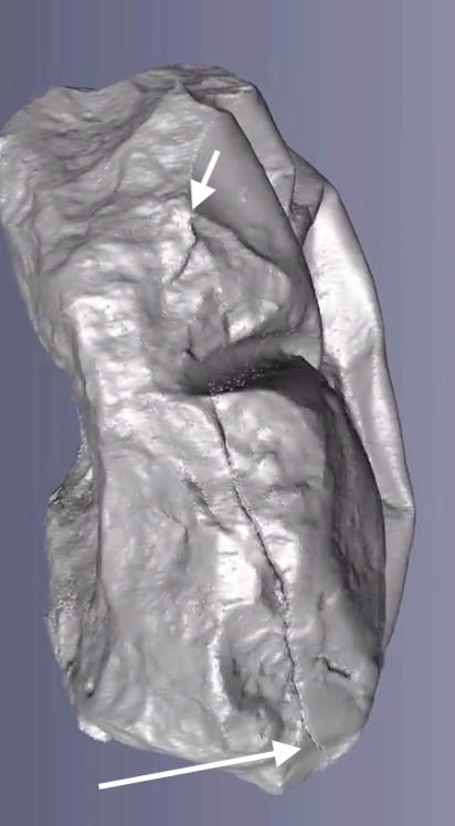 Figure 2b. Is that a slit in the egg shell? I am still awaiting the text of the study.