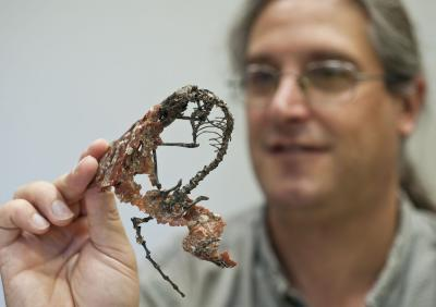 Figure 1. Co-author Jonathan Block holding up the rather complete and articulated skeleton of Labidolemur still encased in a bit of reddish matrix.
