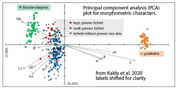 Figure 4. Principal component analysis (PCA) plot for morphometric characters from Kaldy et al. 2020.