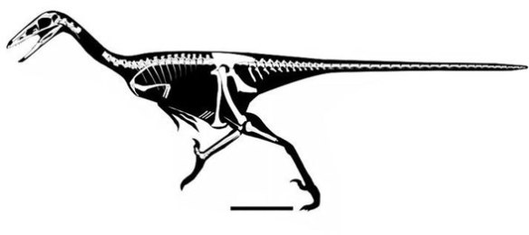FIgure 5. Gobivenator is the most completely known troodontid. It nests with Zanabazar in the LRT.