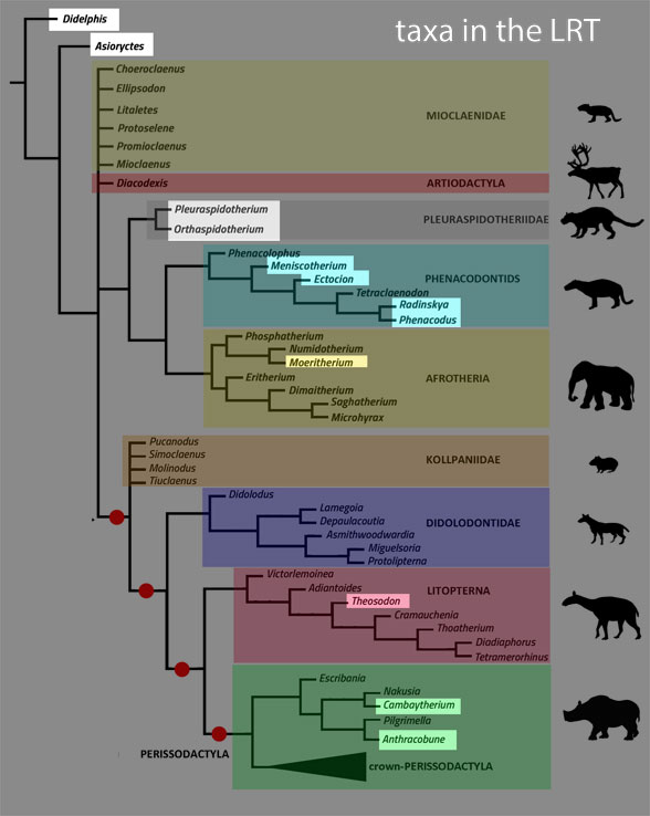Figure 3. From Chimento and Agnolin 2020, colors added. Grayed out taxa are not tested in the LRT. Many of these are based on teeth only.