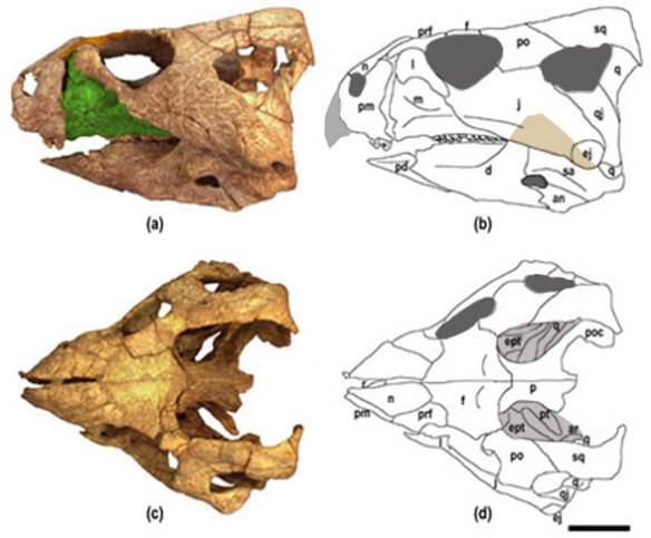 Figure 2. Beg tse nests with Auroraceratops in the LRT.