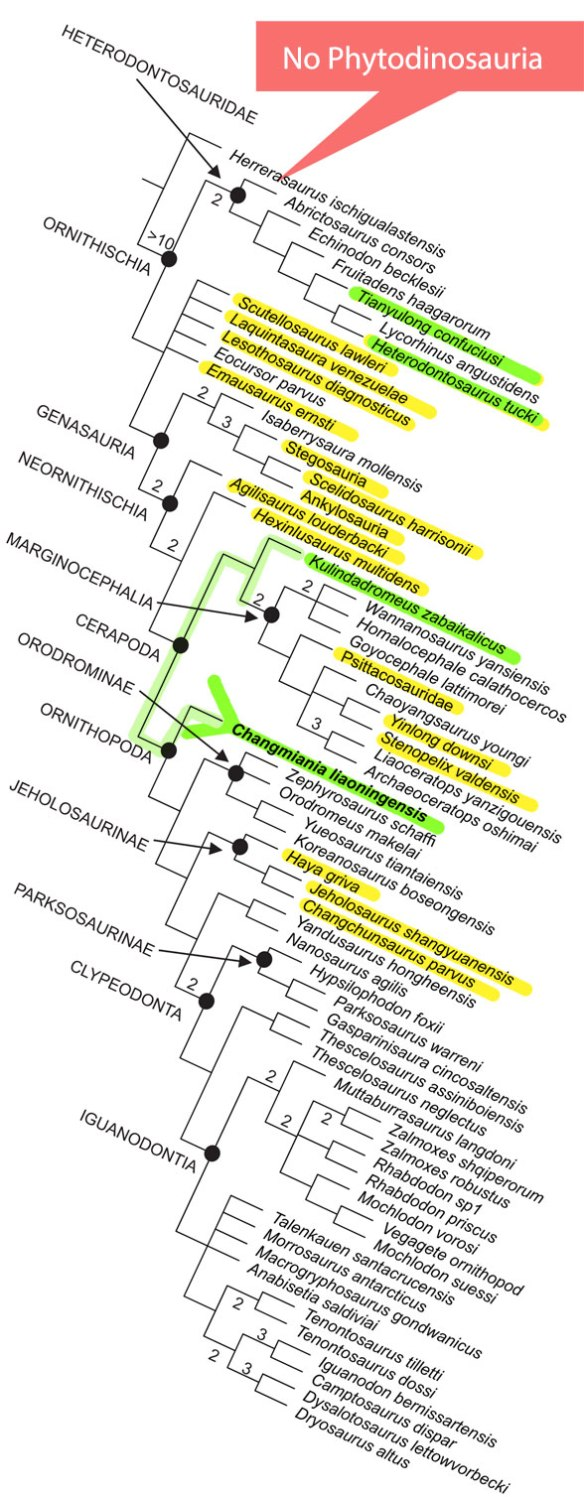 Figure y. Cladogram of the Ornithischia from Yang et al. 2020. Colors added. Green= related taxa in the LRT. Yellow = taxa share with the LRT.