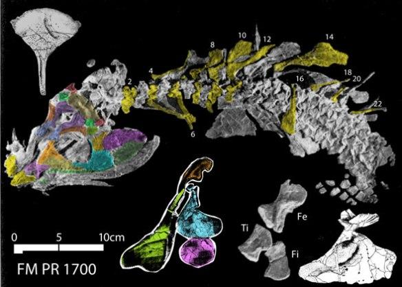 Figure 1. Whatcheeria fossil.