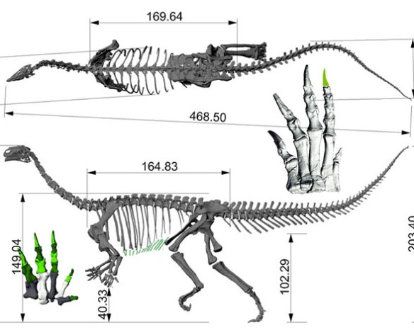 Figure 2. Plateosaurus skeleton digitized.
