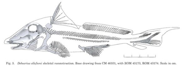 Figure 1. Debeerius reconstruction from Grogan and Lund 2000. Compare the skull to Figure 2.
