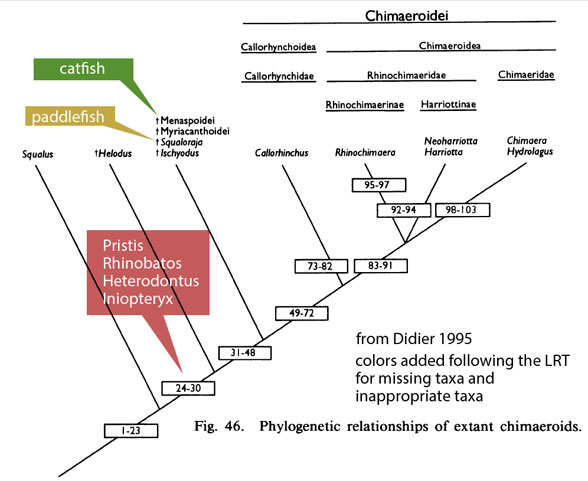 Figure 1. Cladogram from Didier 1995, colors added to reflect taxon inclusion, exclusion according to the LRT (see figure 2).