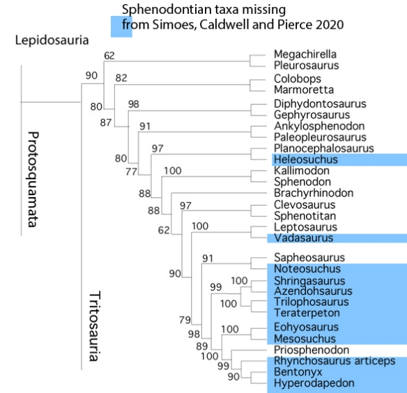 Figure 2. Subset of the LRT focusing on Sphenodontia.Blue bars are taxa omitted by the authors.
